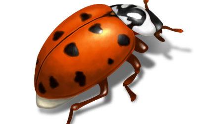 Fall Ladybugs or Asian Lady Beetles?