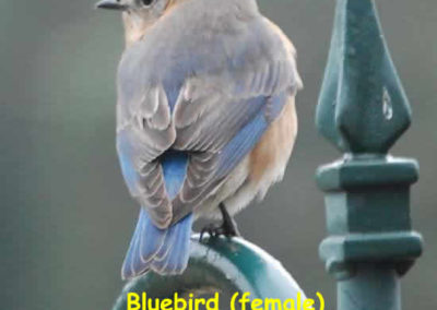 Birds of Dunroy